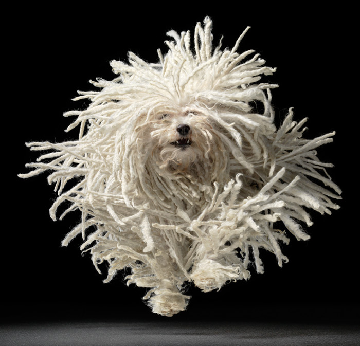 Flying Mop Foto: Tim Flach Hon FRPS