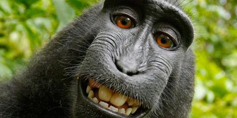 maimuta selfie